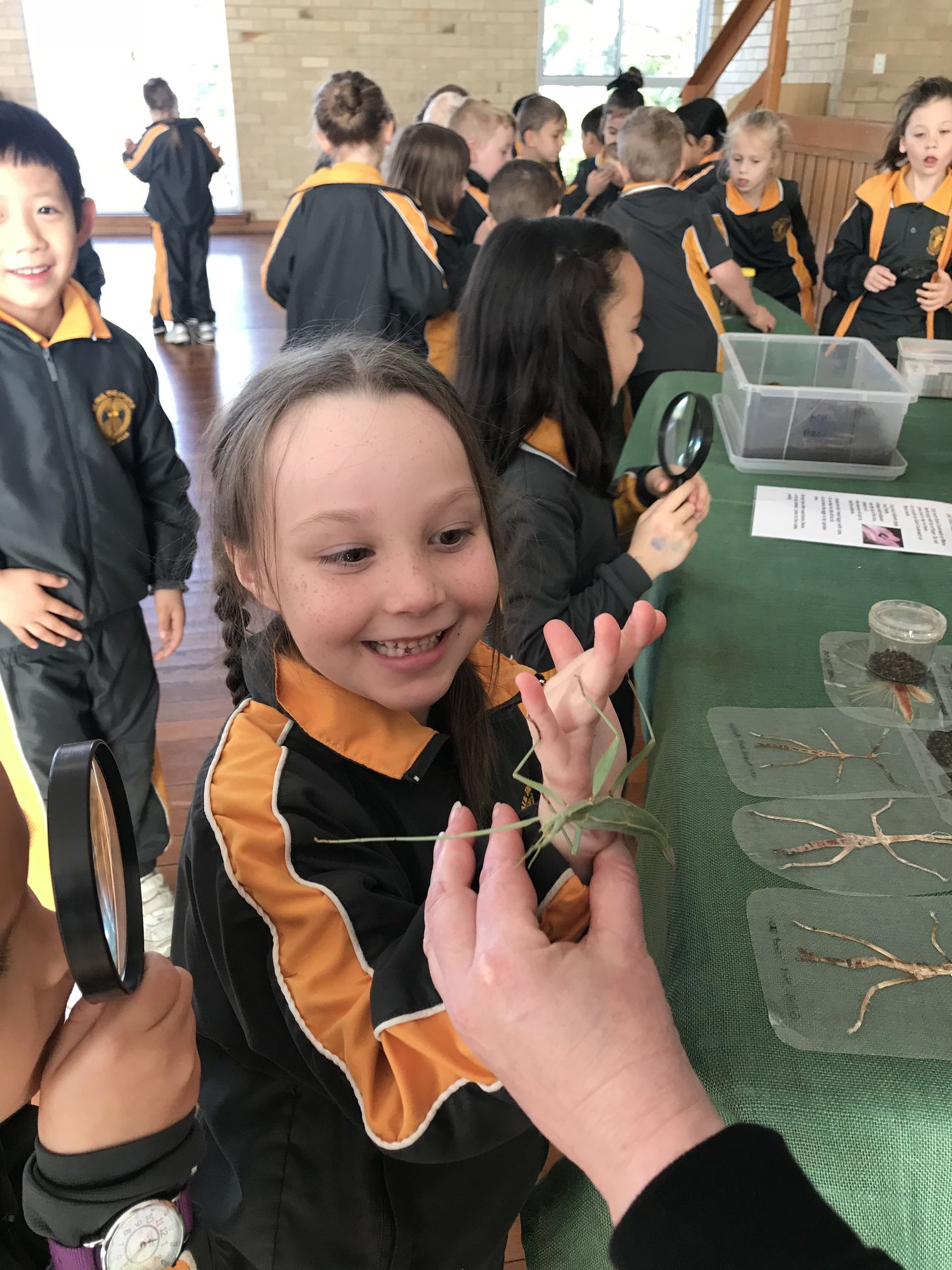 Year 1 Minibeast Incursion 2018 07