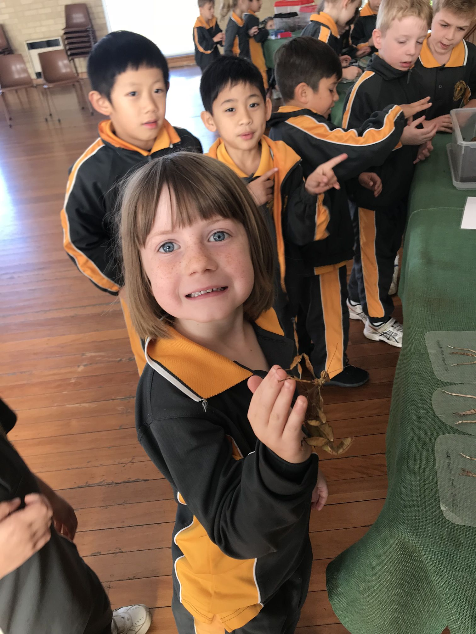 Year 1 Minibeast Incursion 2018 11